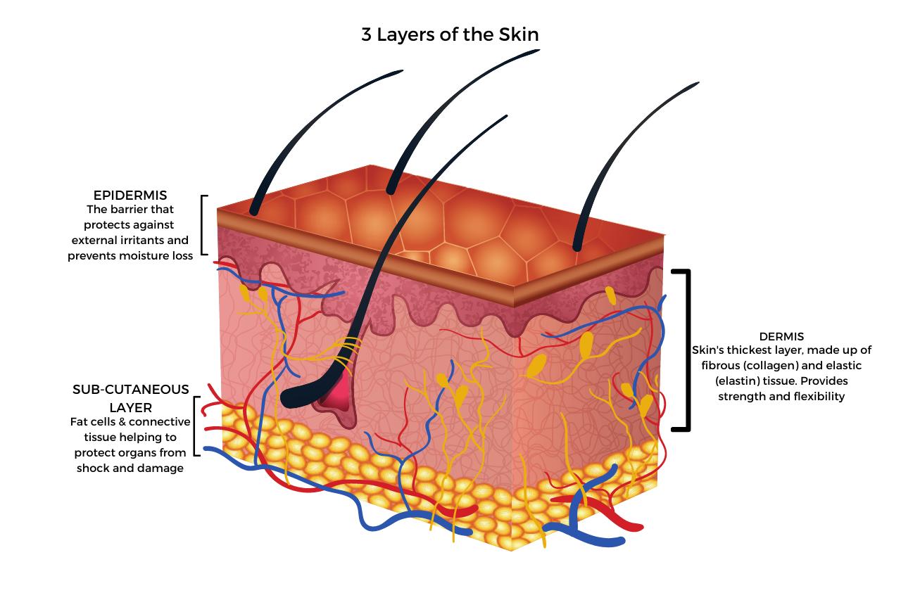 Skin-layers-apothekari-skincare