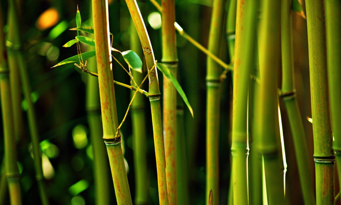 3 Reasons To Fall in Love With Bamboo Powder