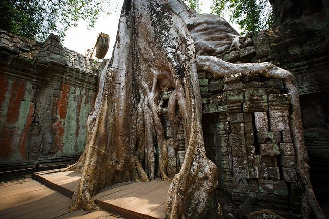 Ta Phrom - Angkor