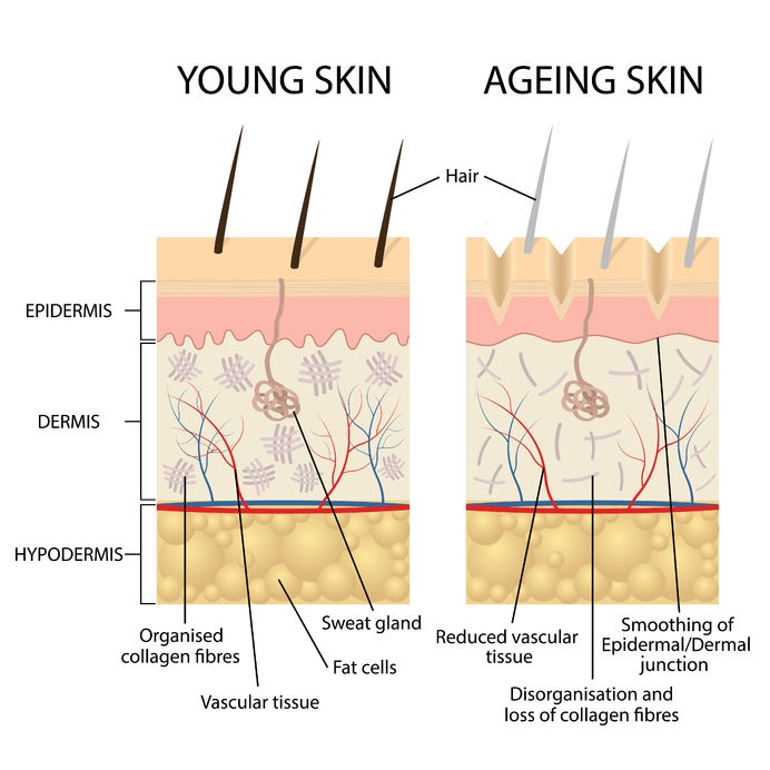 young vs old skin